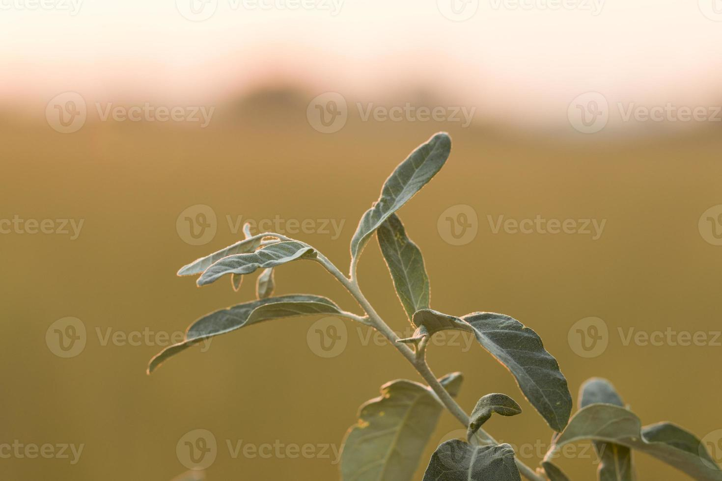 Pflanze. foto
