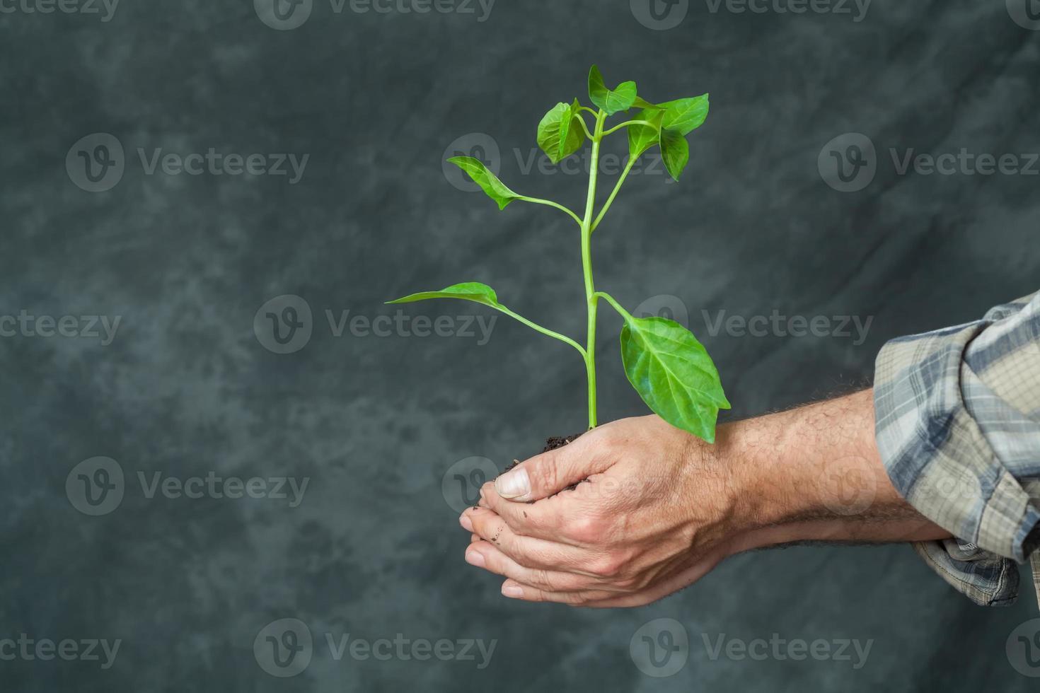 Hände halten eine Pflanze wachsen foto