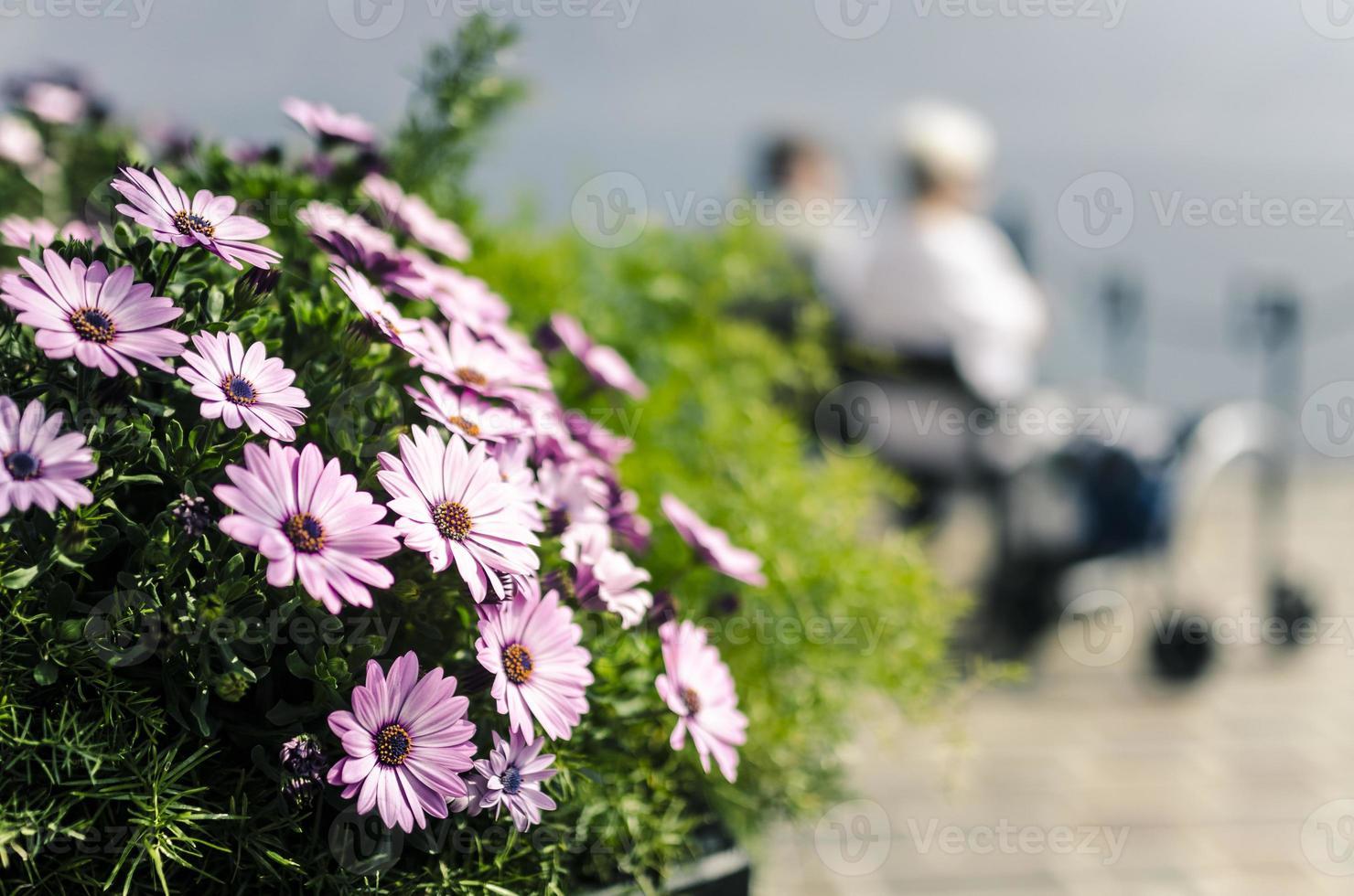 lila Blumen und älteres Paar, das auf einer Bank ruht foto