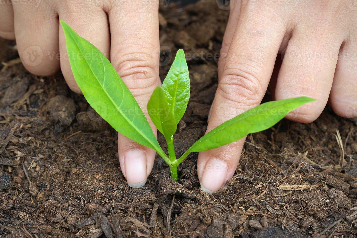 Frauen, um Bäume zu pflanzen. Nahansicht. foto
