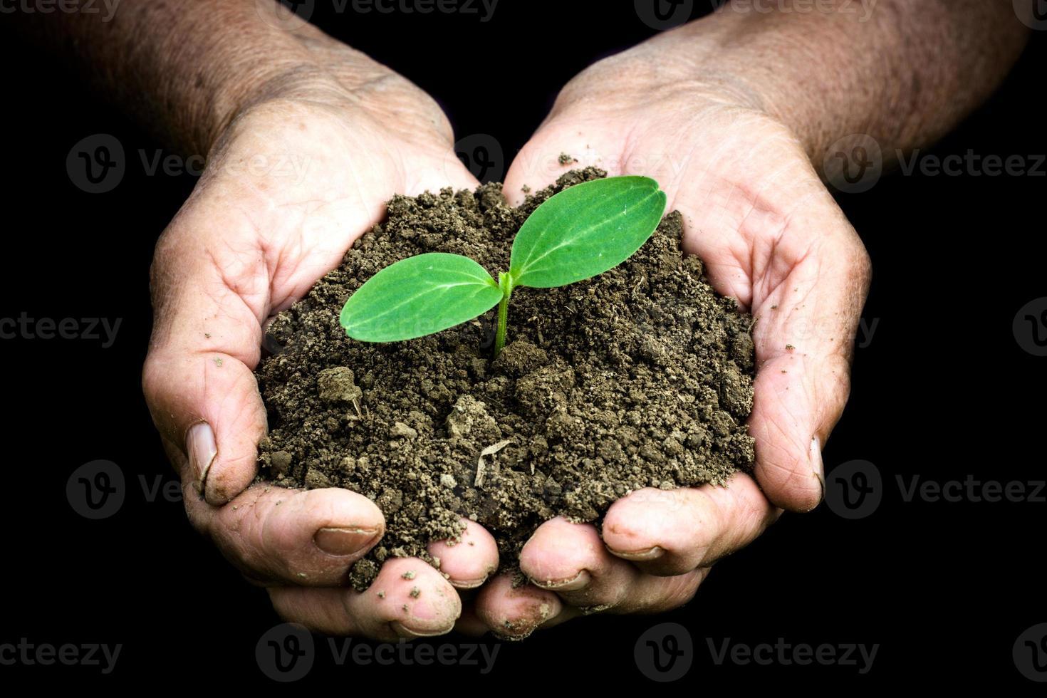 Botanik-Konzept foto