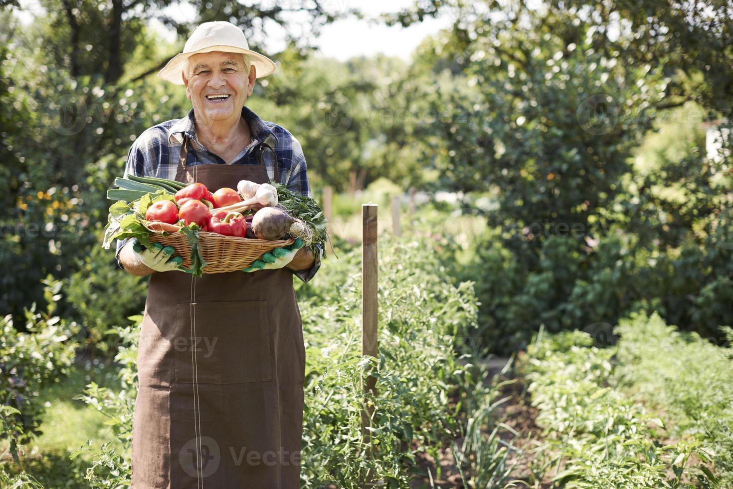 Mein Garten gibt mir viel Gemüse foto