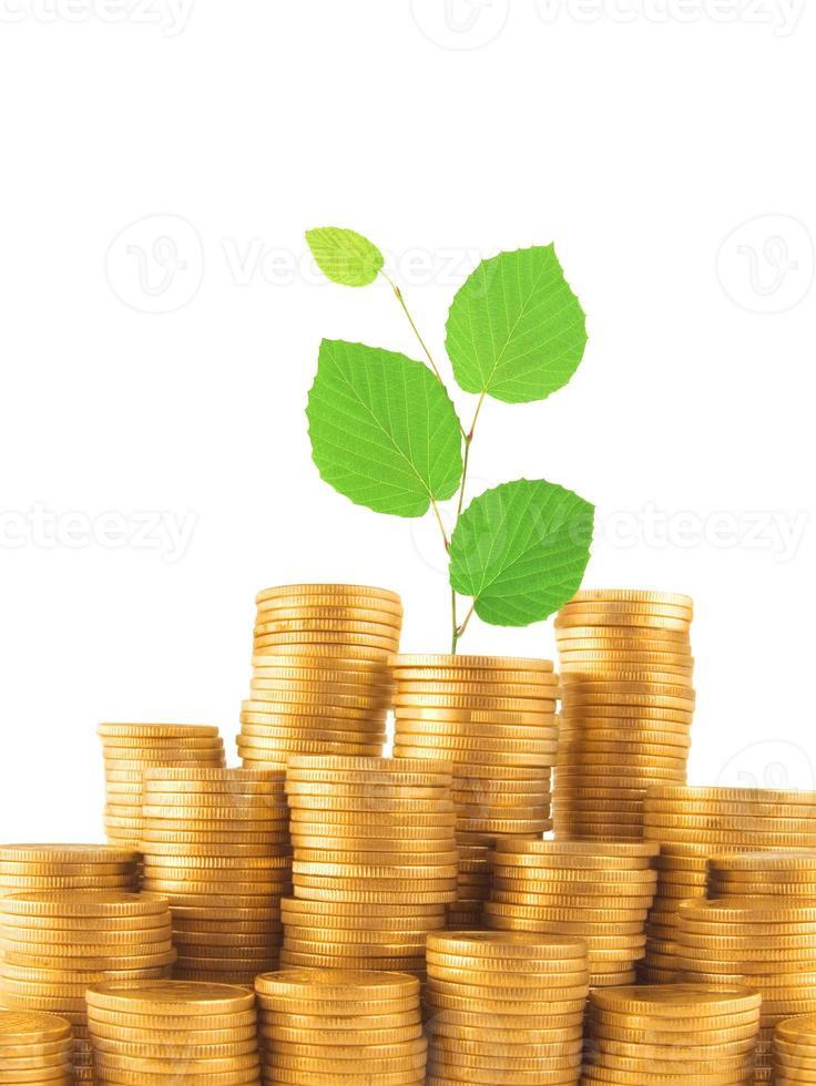 Münzen und grüne Pflanze isoliert auf weiß foto