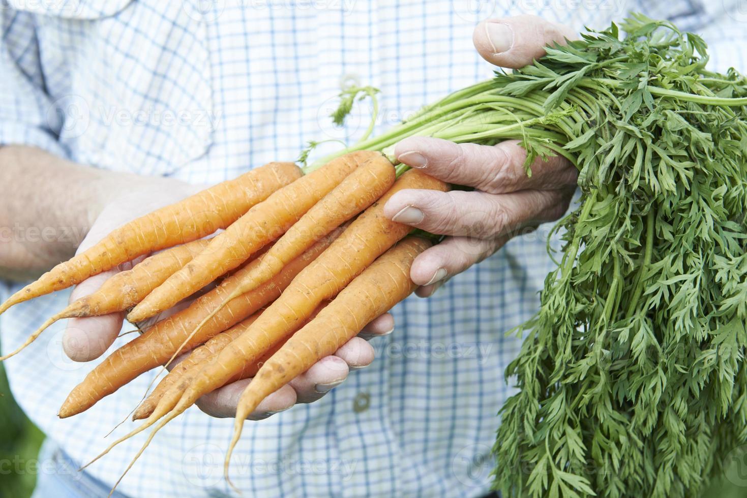 Nahaufnahme des Mannes, der frisch gepflückte Karotten hält foto