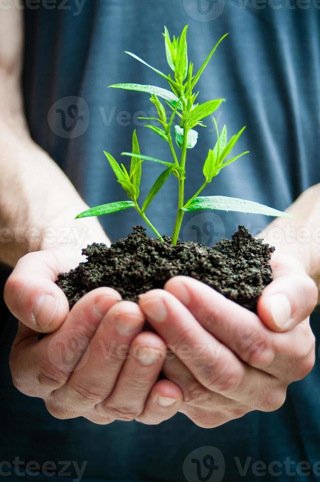 menschliche Hände, die grüne Pflanzennahaufnahme halten foto