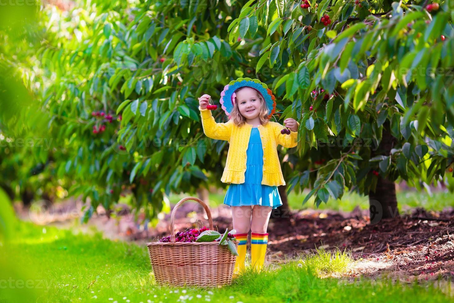 kleines Mädchen, das frische Kirsche auf einem Bauernhof pflückt foto
