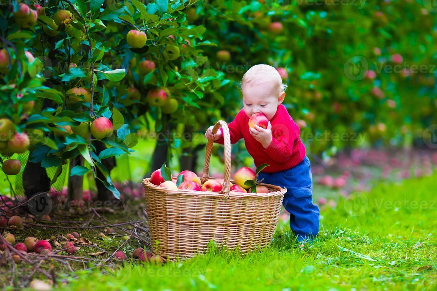 süßer kleiner Junge mit Apfelkorb auf einem Bauernhof foto