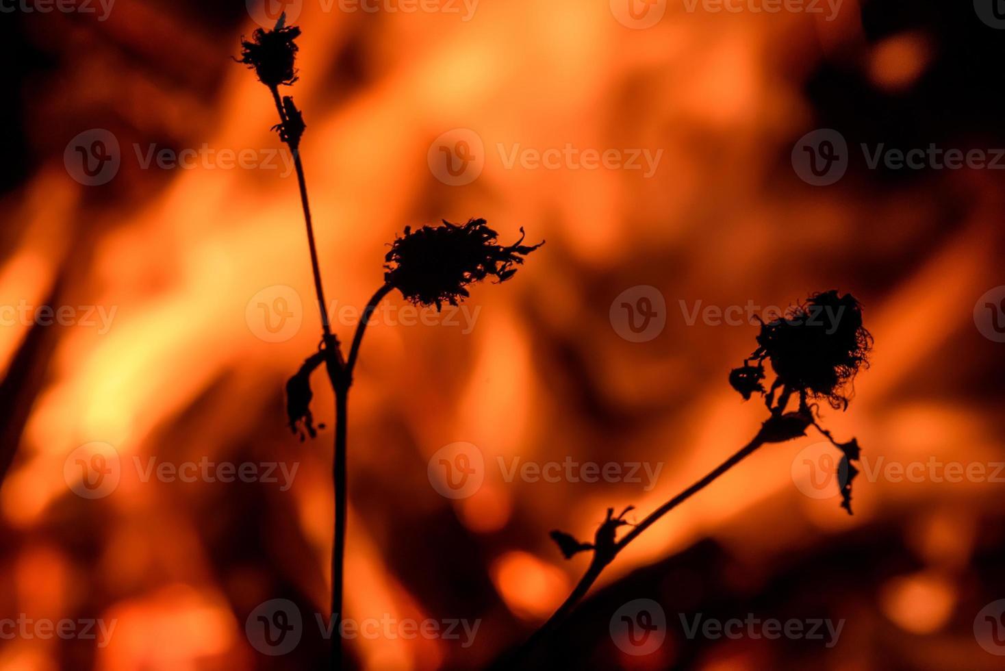 Feuerflamme Lagerfeuer Zweig foto