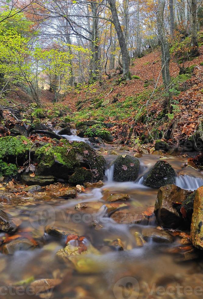 Herbst. foto