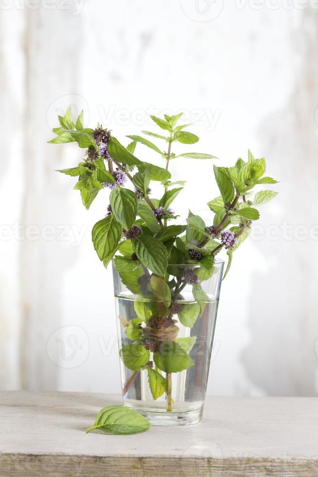 frische Minze in einem Glas Wasser foto