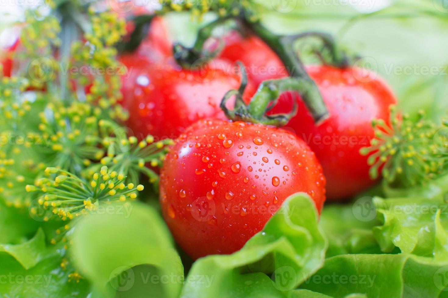 Nahaufnahme von Tomaten auf einem Hintergrund des grünen Salats foto