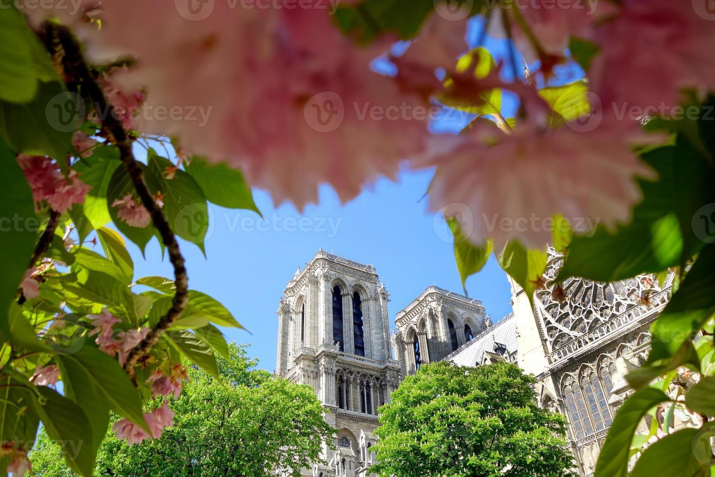 notre dame im frühling in paris, frankreich foto