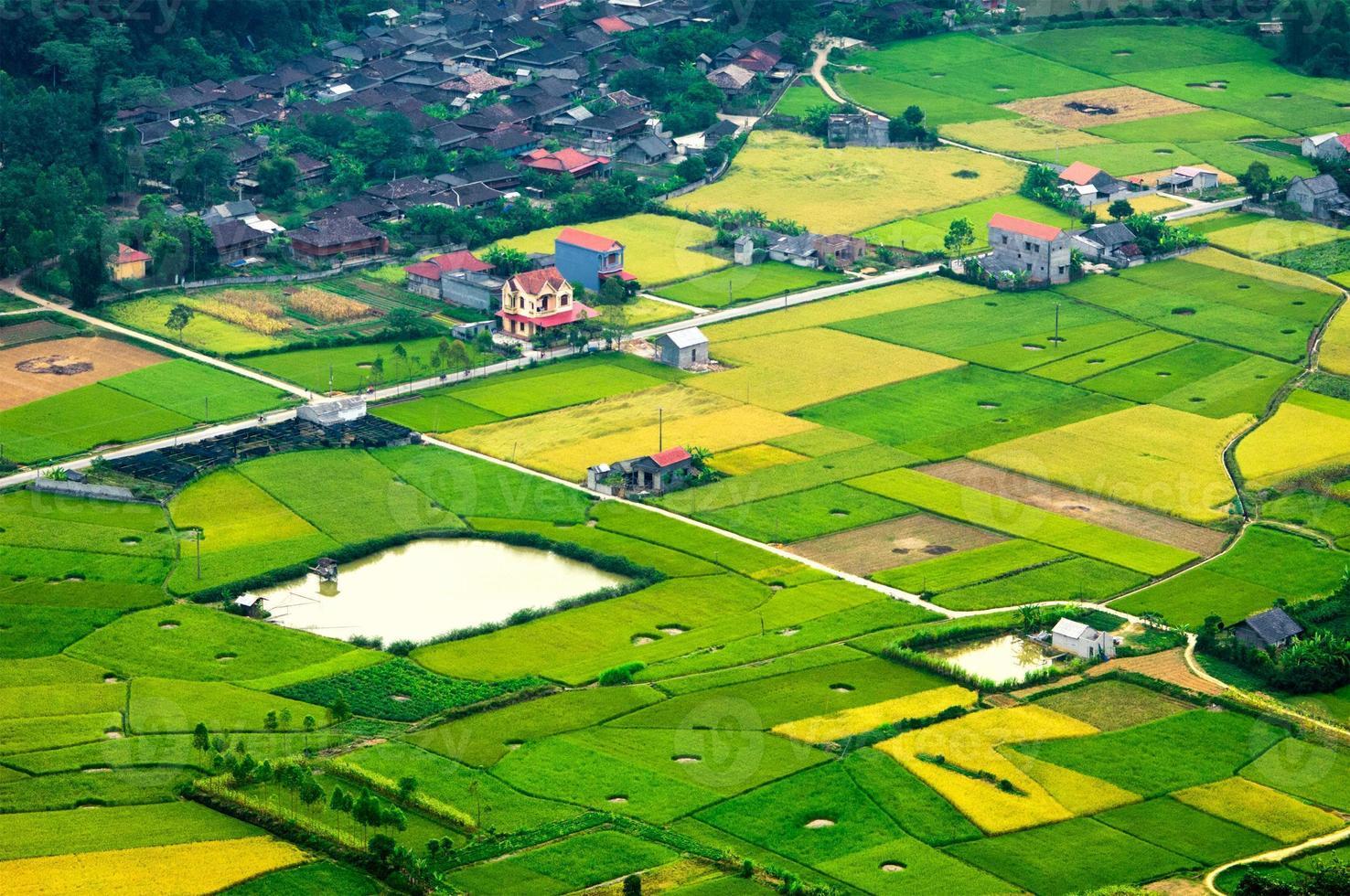 Reisfeld in der Erntezeit in Bac Son Valley, Lang Son, Vietnam foto