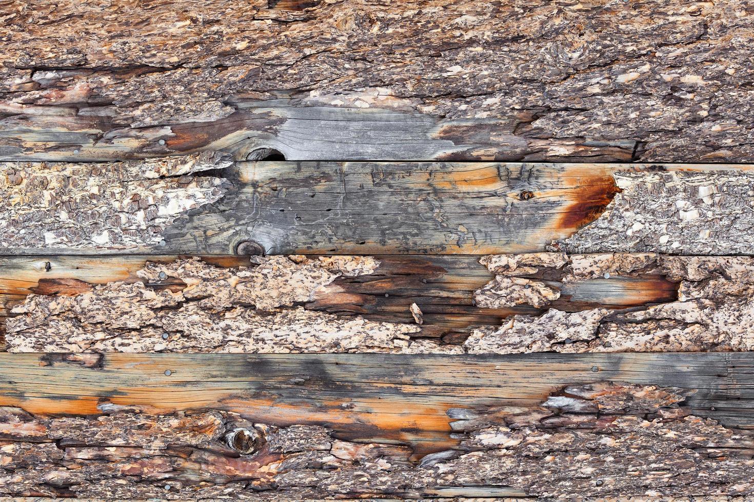 Holz foto