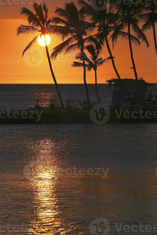 Silhouette von Kokospalmen foto