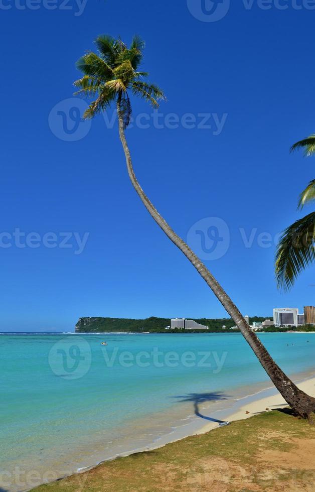 Palme auf einem tropischen Paradies foto