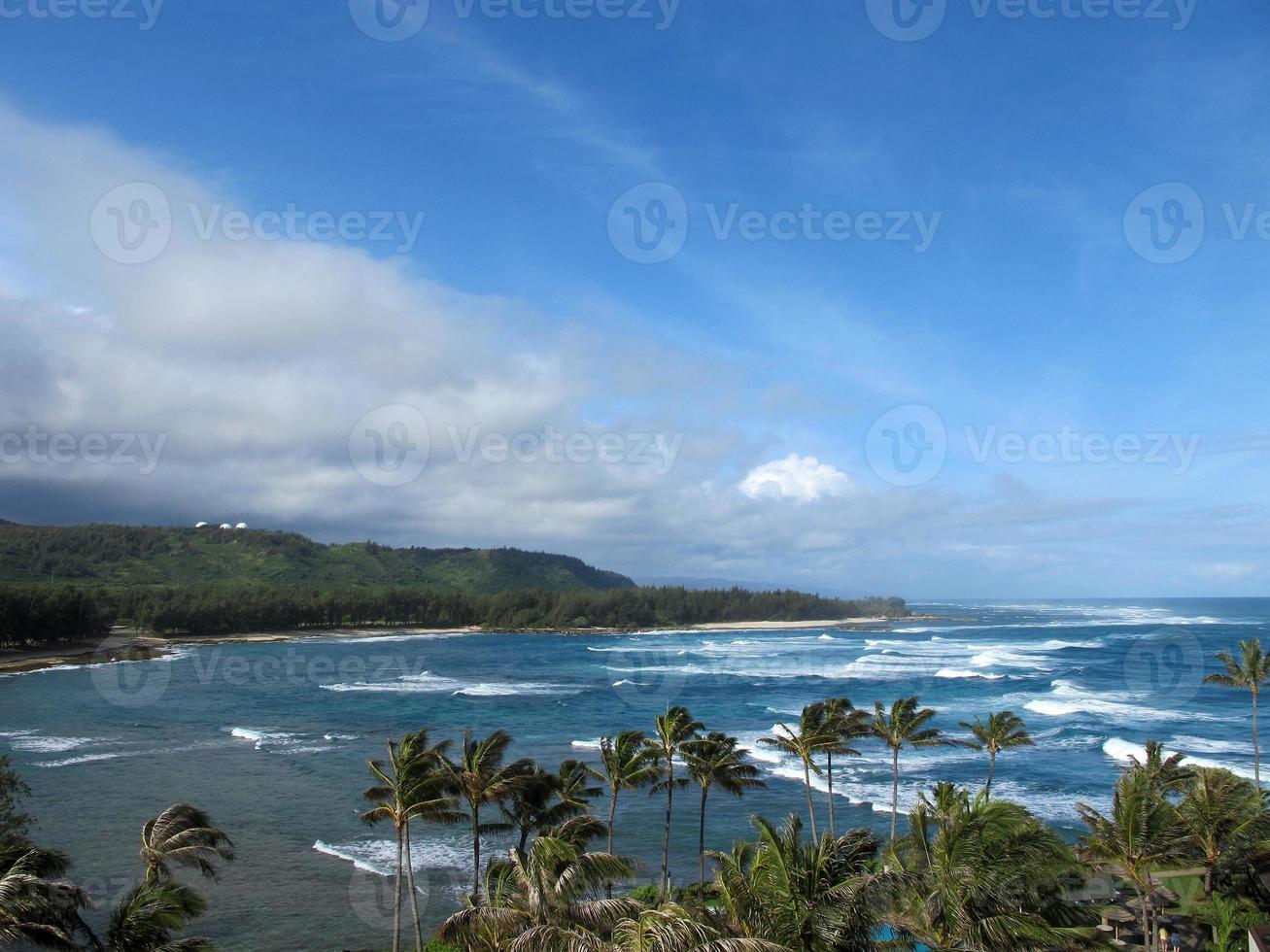 Nordufer der Palmen des Pazifischen Ozeans von Oahu Hawaii foto