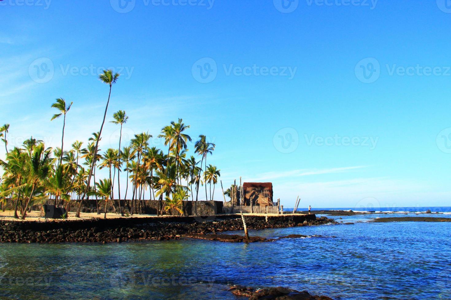 Hawaii Strand und Kokospalmen foto