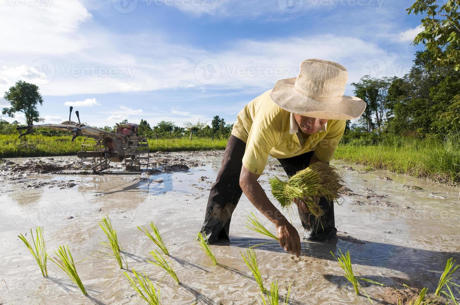 asiatischer Reisbauer foto