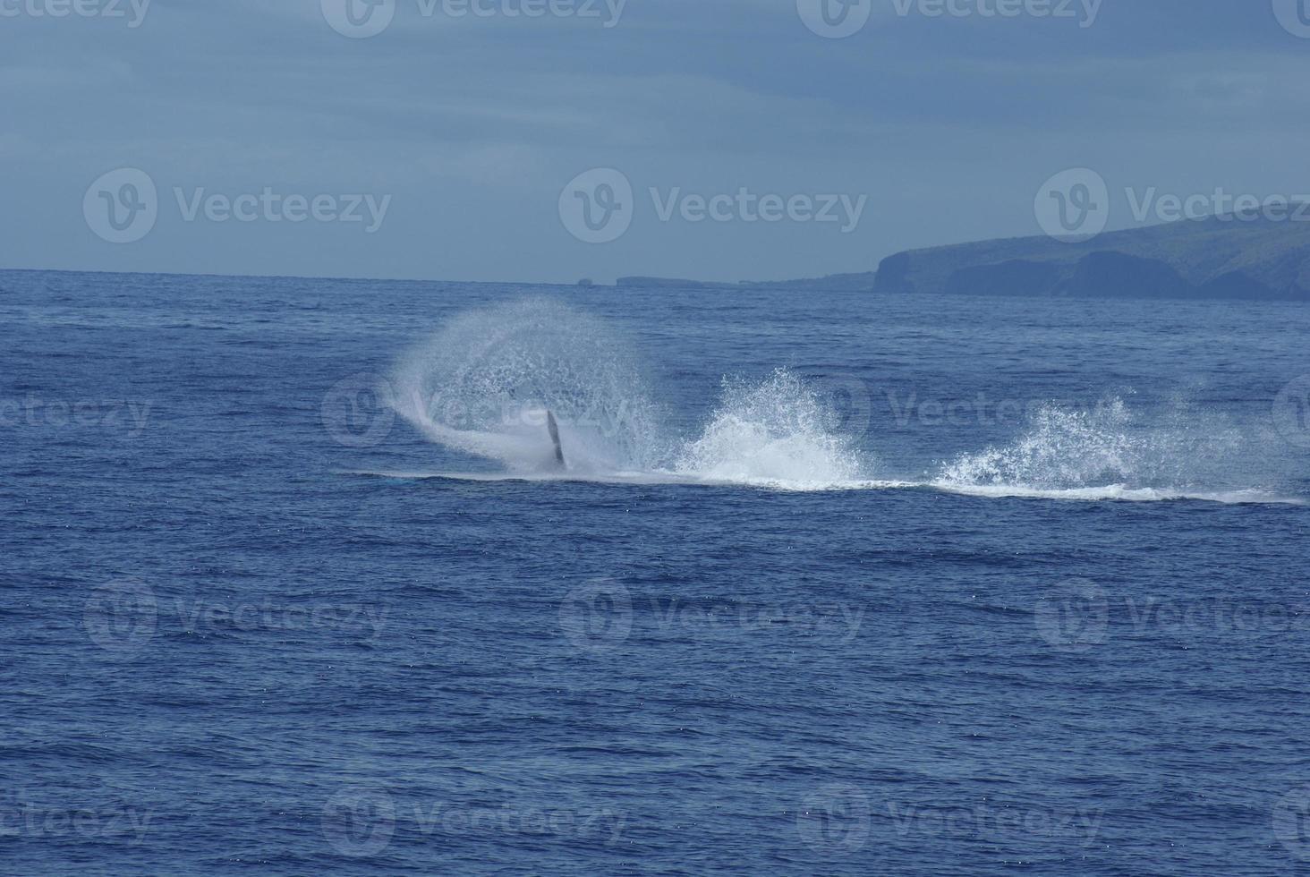 Flossenflippspaß mit Buckelwalen foto