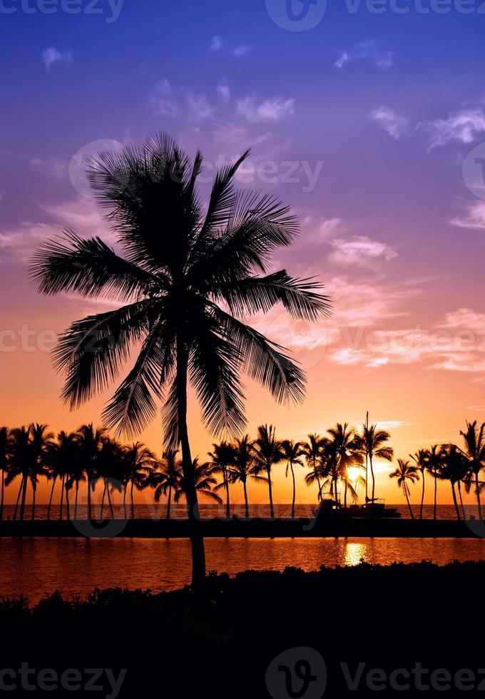 Sonnenuntergang der hawaiianischen Palme foto
