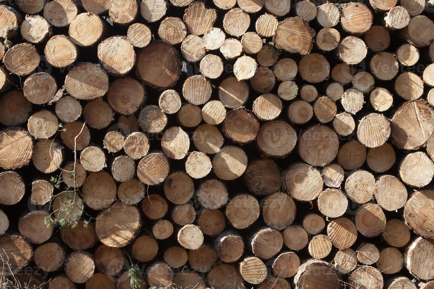 Holzhaufen foto
