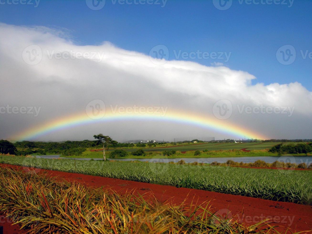 Regenbogen auf Dole Plantage foto