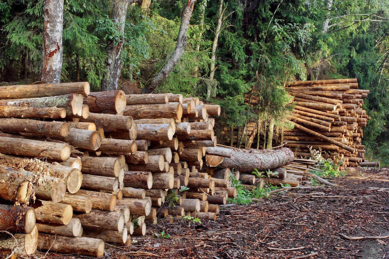 industrieller Holzeinschlag foto