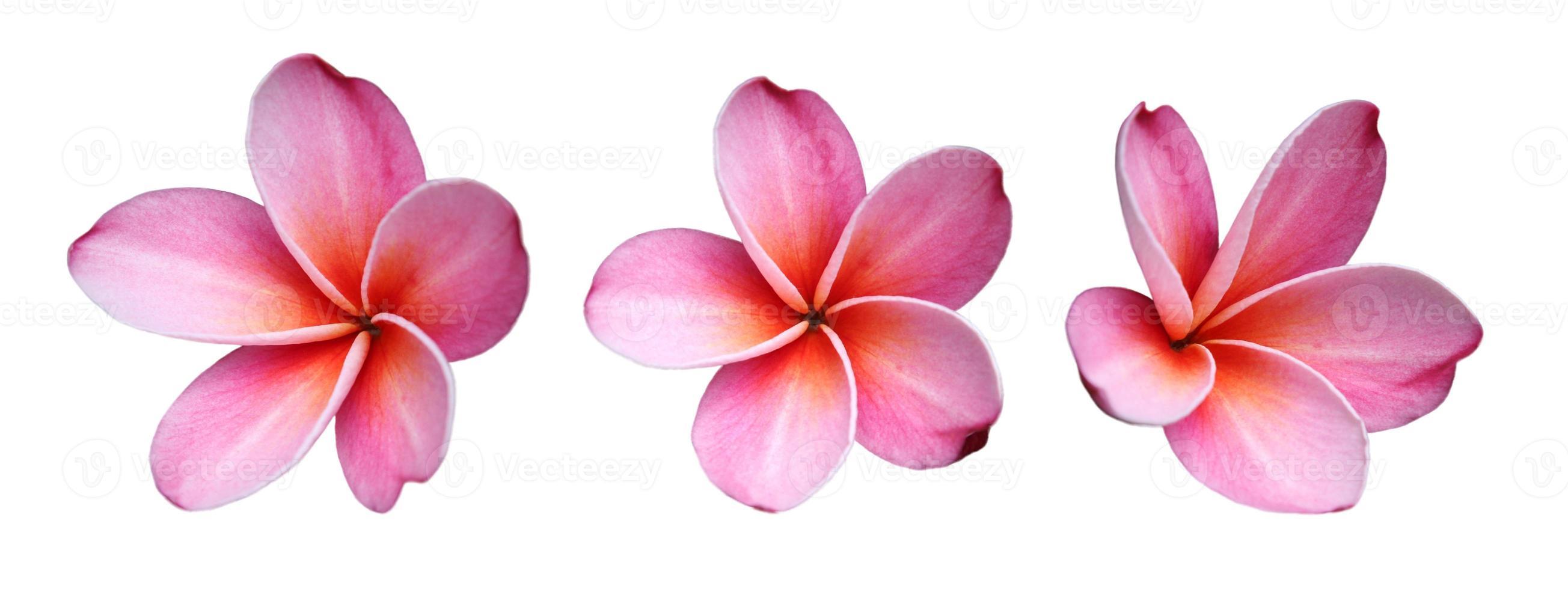 Frangipanis Blumen foto