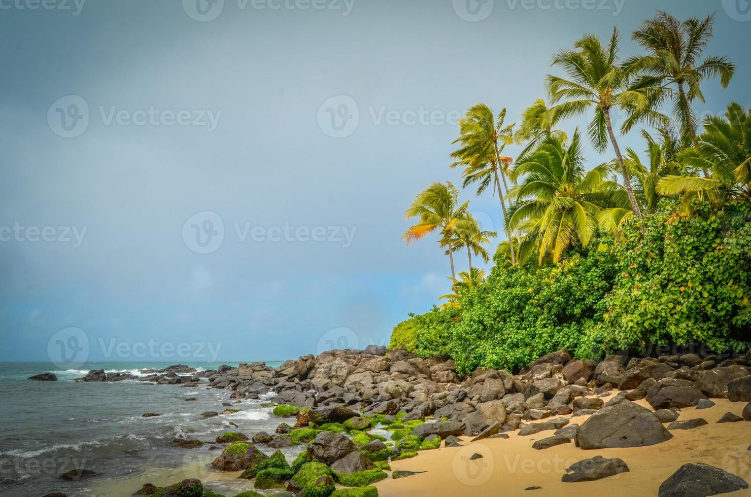 wilder Strand foto