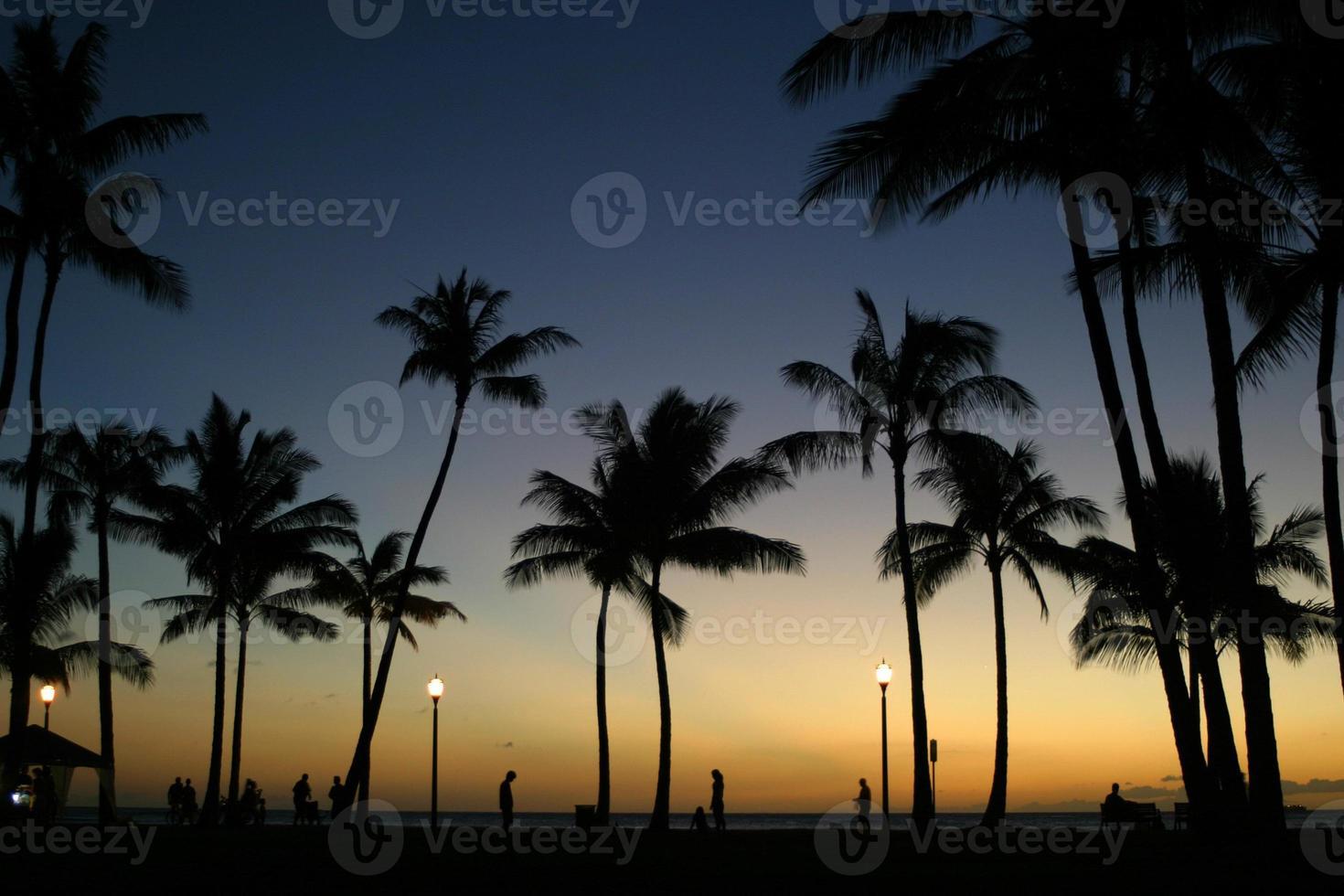 Palmen in der Abenddämmerung foto