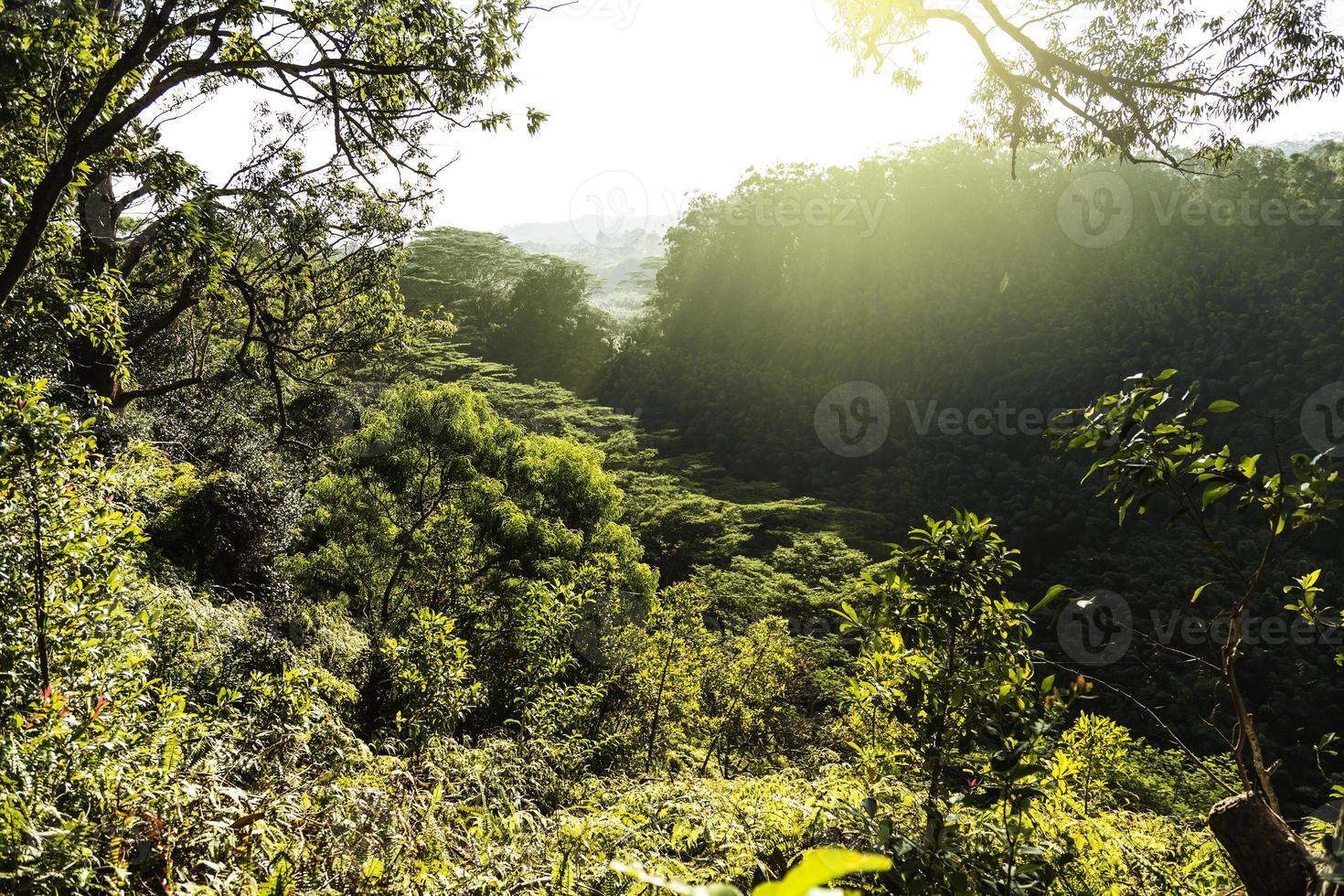 entlang des Waikomoi-Wanderwegs auf Maui bei Sonnenaufgang foto