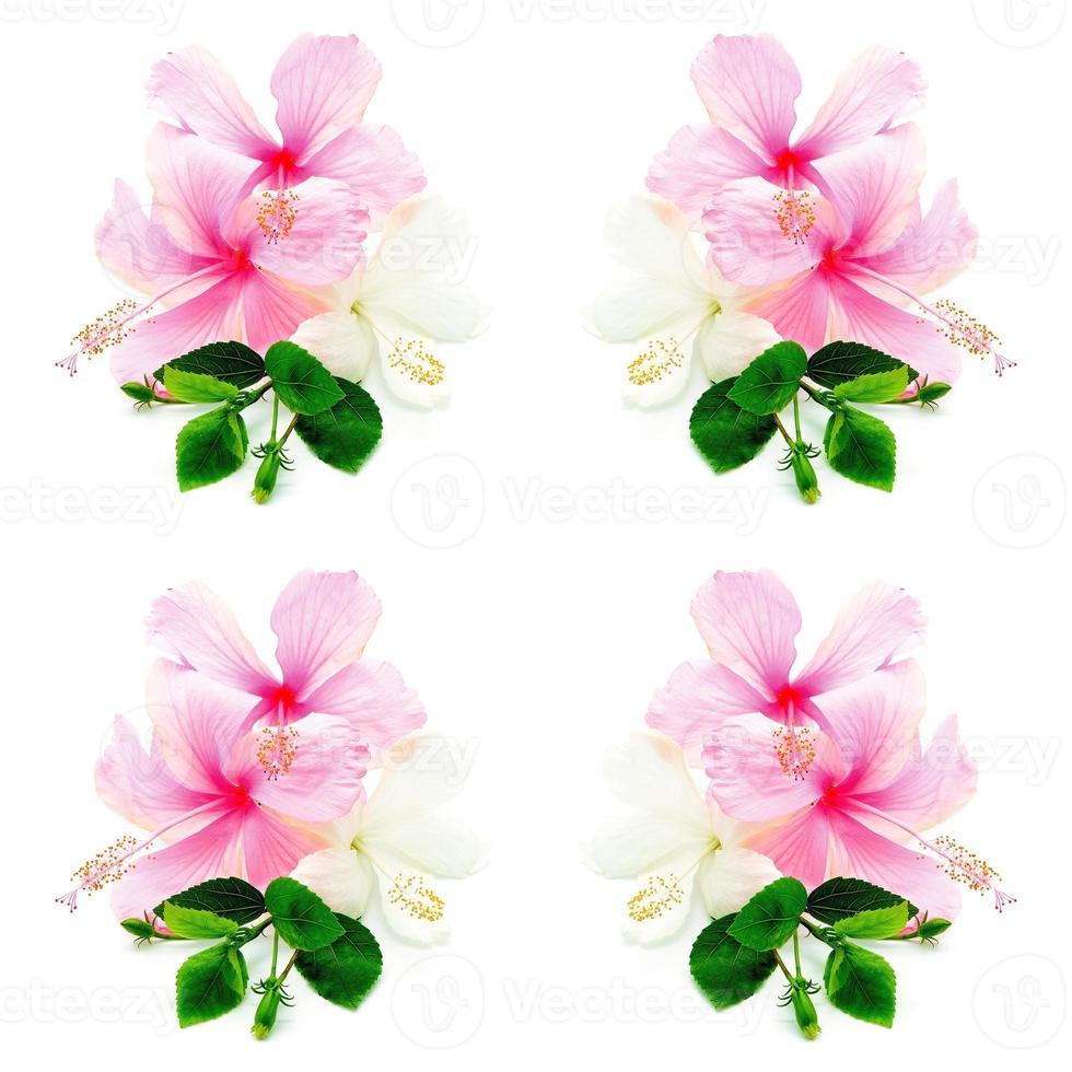 rosa und weißer Hisbiskus foto