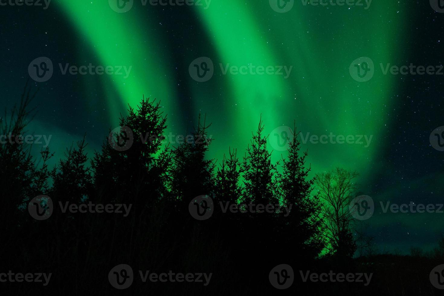Aurora Borealis (Nordlichter) hinter Bäumen foto