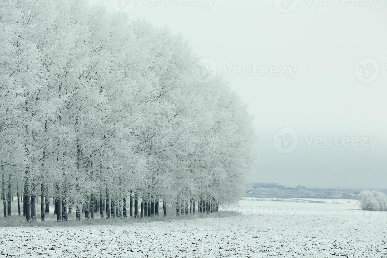 schneebedeckte Winterstraße in einem Feld foto