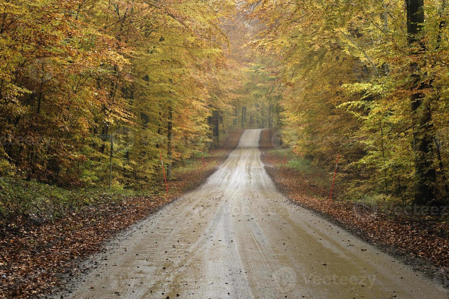 Schotterstraße in einem Herbstbuchenwald foto