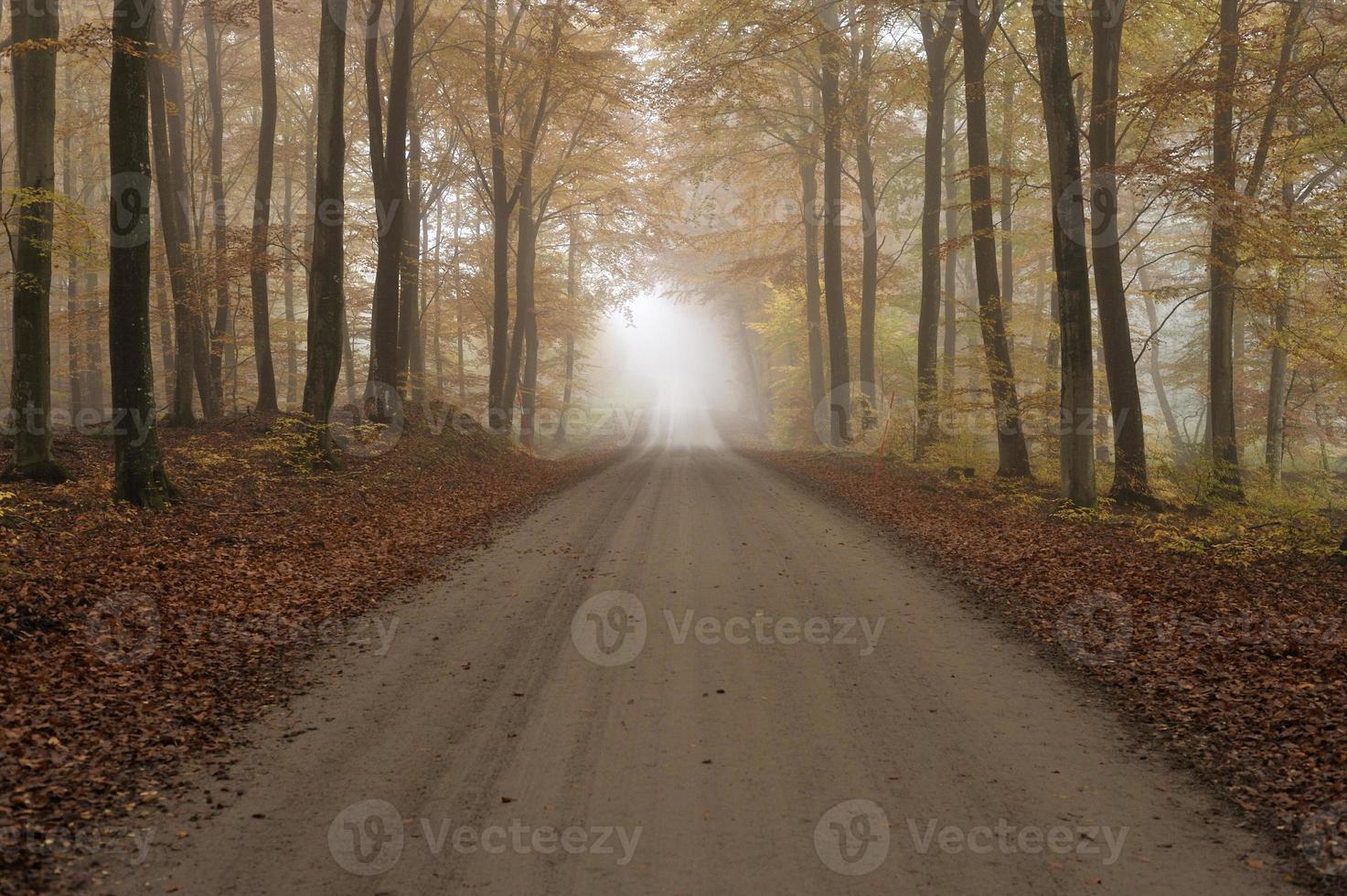 Schotterstraße in einem nebligen Buchenwald foto