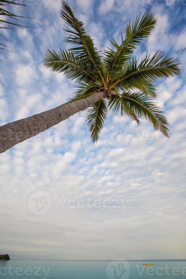Fidschi Plantageninsel vertikal mit Palme foto