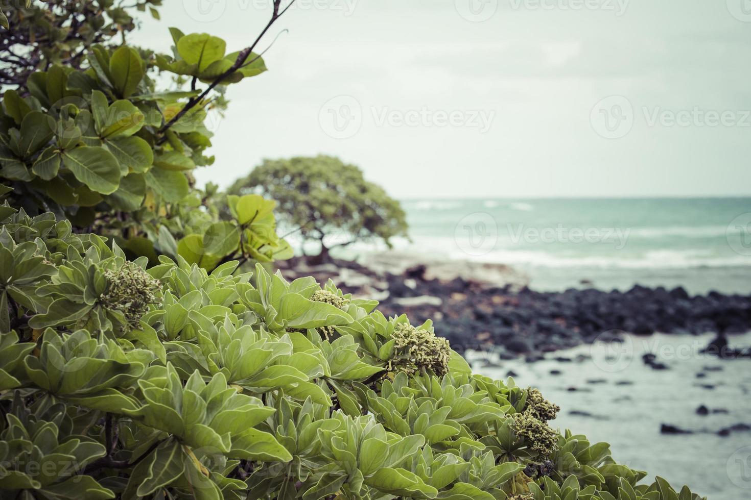 Kokospalme am Sandstrand in Kapaa Hawaii foto