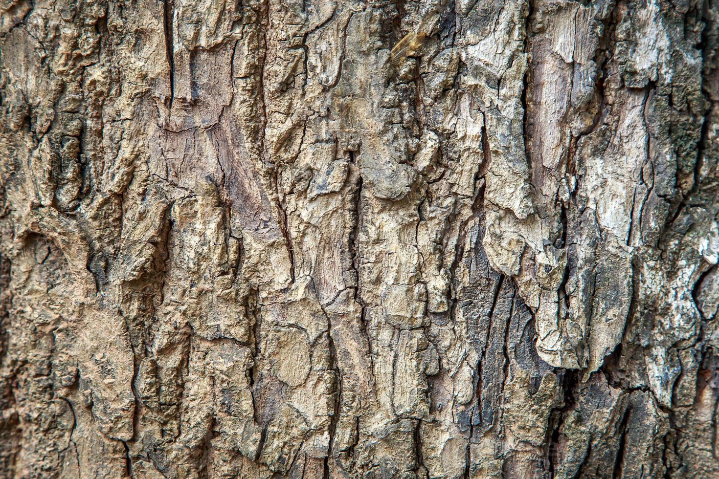 rustikaler Texturhintergrund der abstrakten Baumschale foto