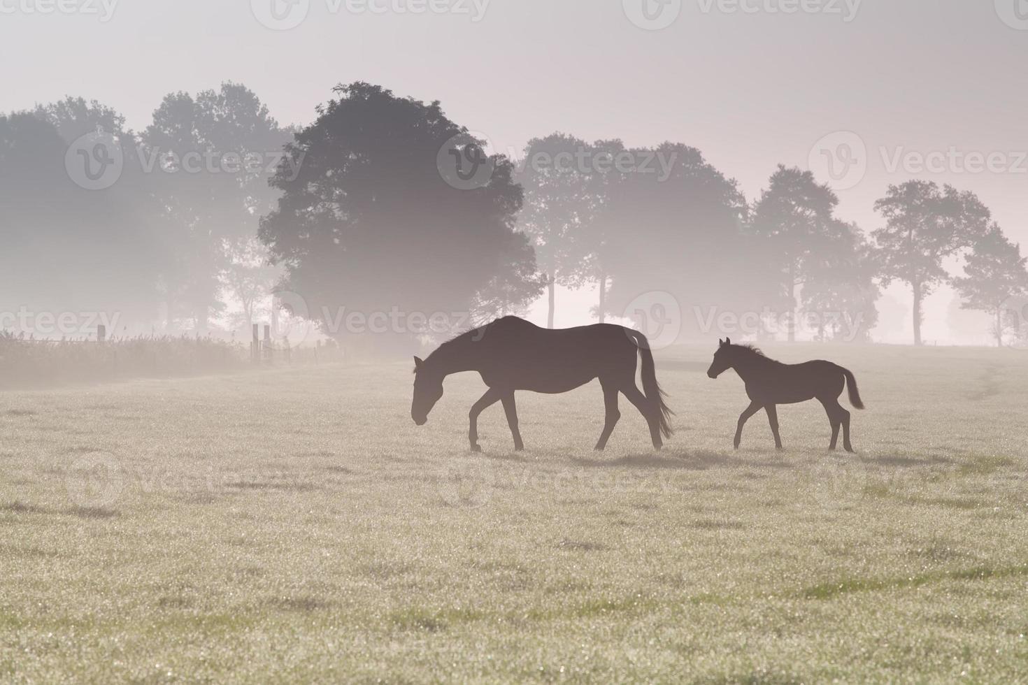 Pferdefamilie spazieren auf nebliger Weide foto