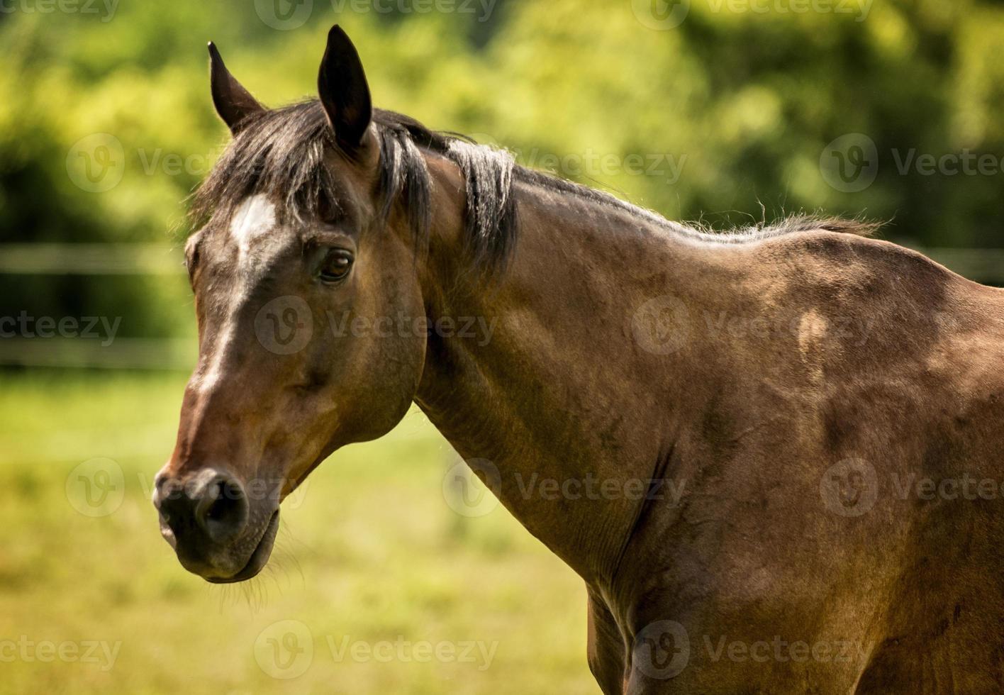Pferdeporträt foto