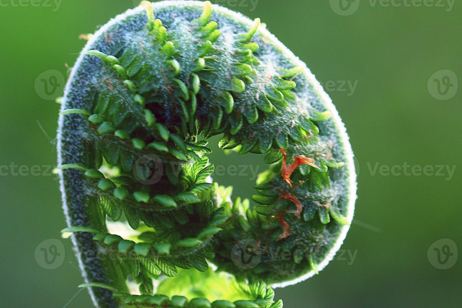 Makrofarn grüner Hintergrund foto
