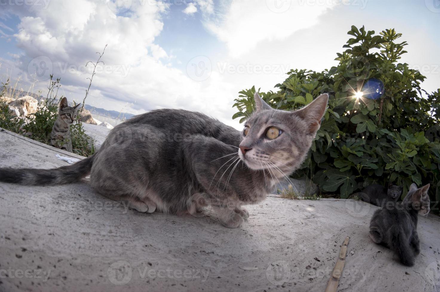Katzenporträt. foto