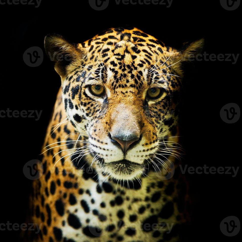 Leopardenporträt foto