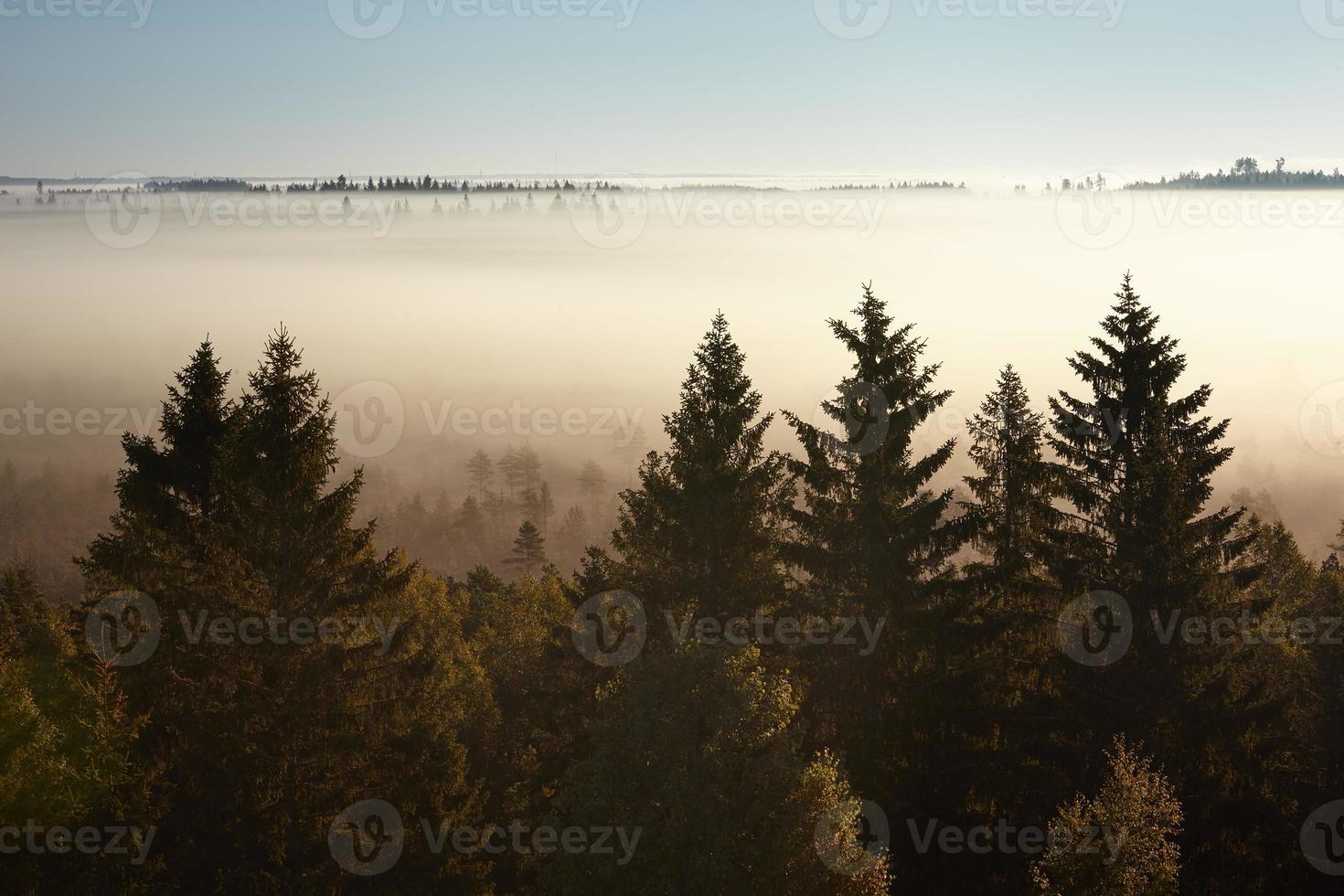 Bäume an einem nebligen Morgen foto