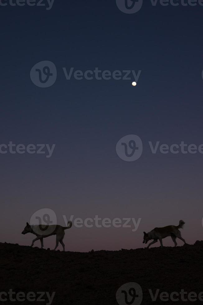 zwei Hunde auf dem Mond bei Sonnenuntergang in der Wüste foto