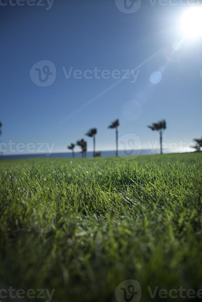 Nahaufnahme von Gras foto