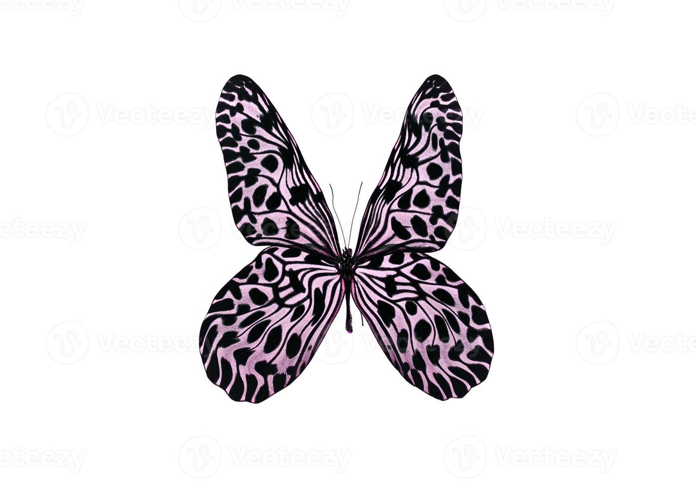 violetter Schmetterling lokalisiert auf weißem Hintergrund foto