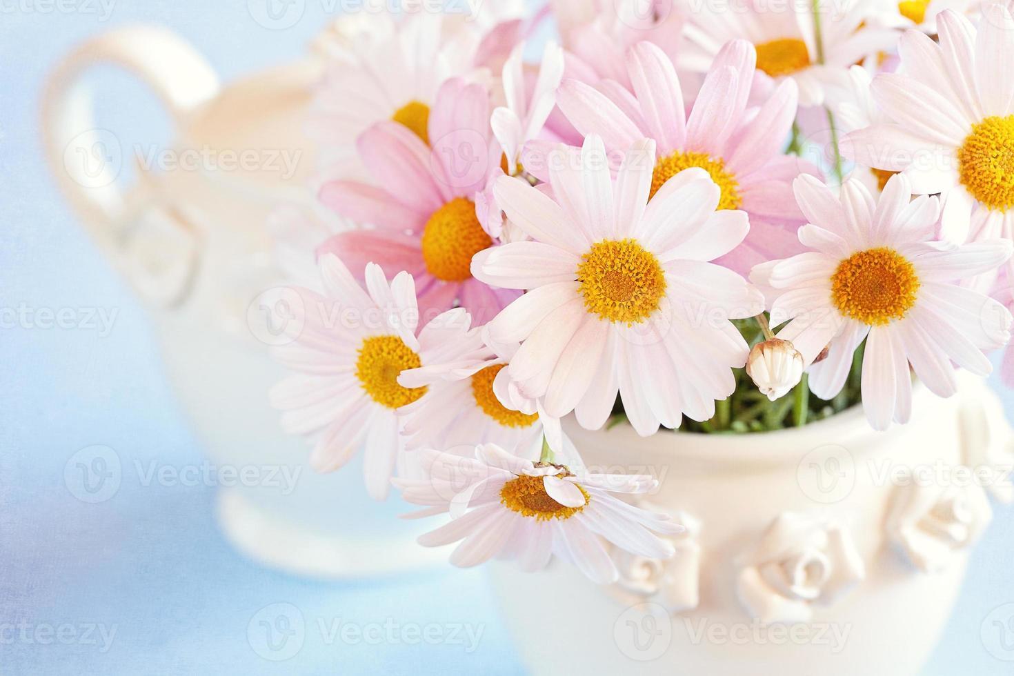 Gänseblümchen Blumen foto